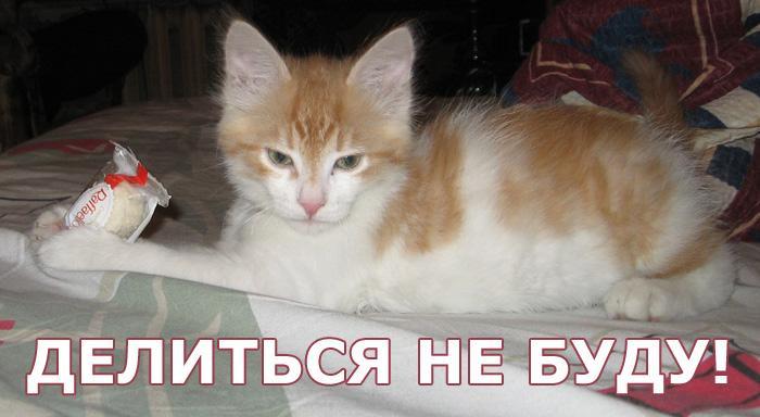 0919ec37e4c8cb82d8.jpg